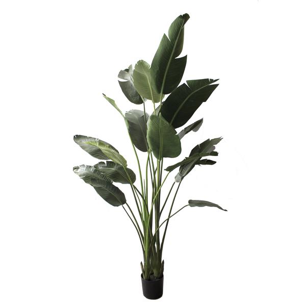 Plante oiseau du paradis dans un pot 7 39 plantes et for Plante oiseau de paradis